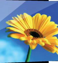 Ambiente-flor